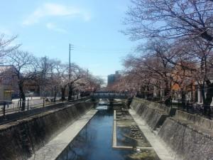 大江川いまいち